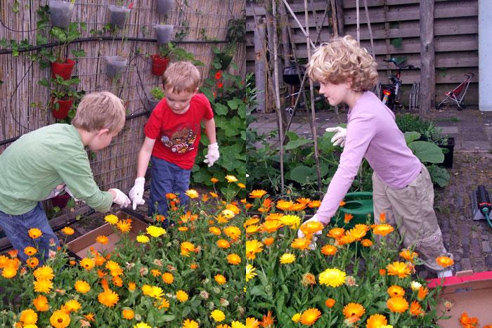 Goudsbloemen plukken